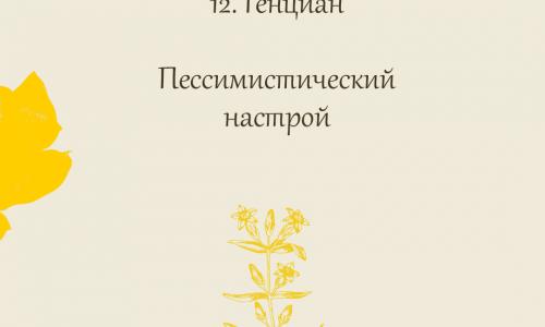 12.Генциан