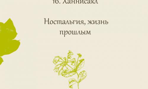 16.Ханнисакл