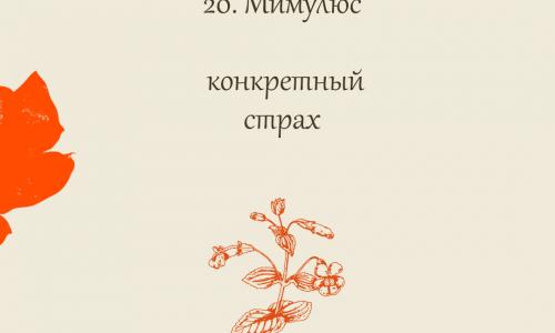 20.Мимулюс