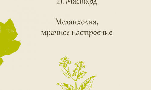 21.Мастард