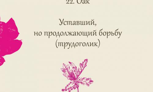 22.Oak (Дуб)