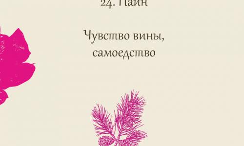 24.Pine (Сосна)