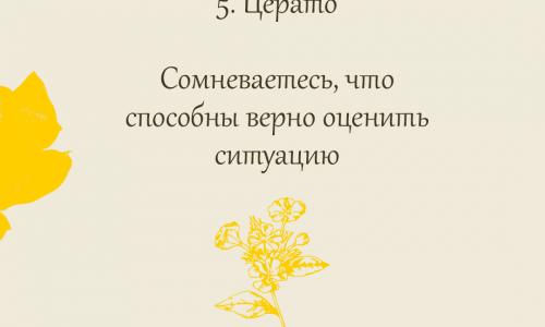 5. Церато