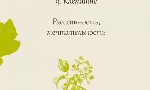 9. Клематис