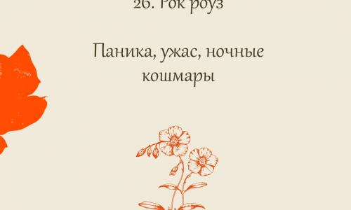 26.Rock Rose (Солнцецвет)