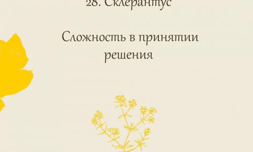 28.Склерантус