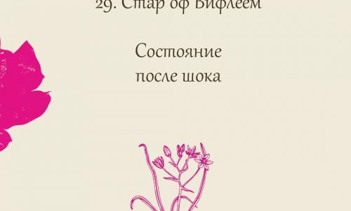 29.Стар оф Вифлеем