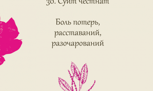30.Sweet chestnut (Каштан Благородный)