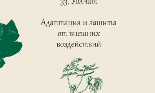 33.Уолнат