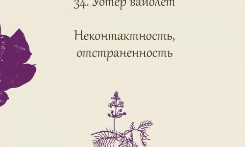 34.Уотер вайолет