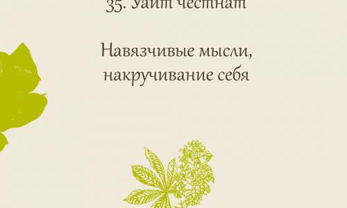 35.White chesnut (Каштан конский)