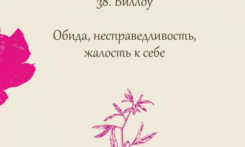 38. Виллоу