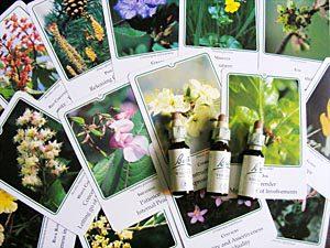 использование растительных лекарственных средств